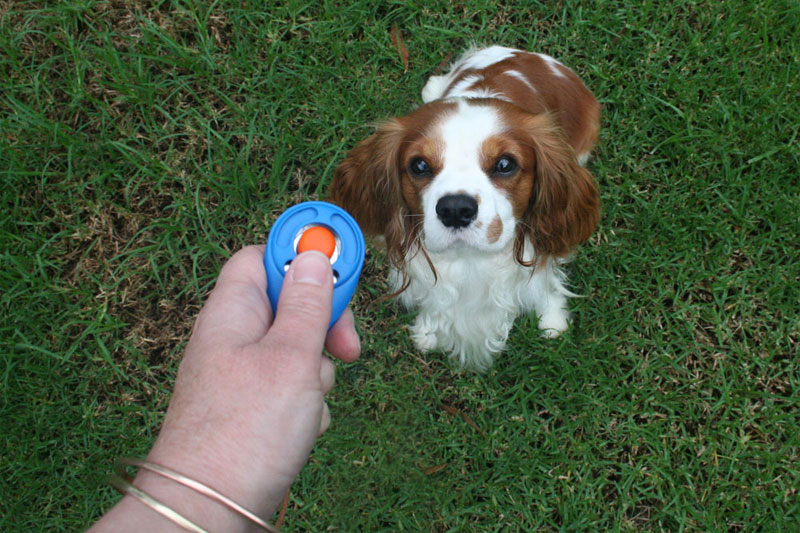 Clicker training for pets