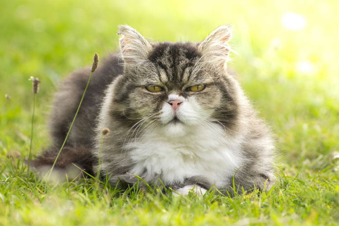 Health issues in older cats