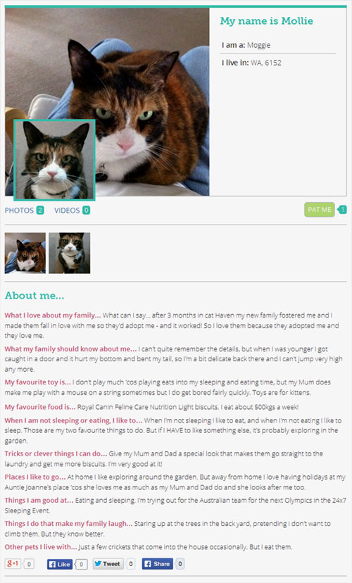 An example of one of our pet profiles