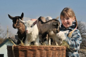 Keeping farm animals as pets