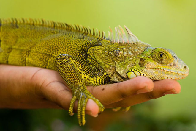 Keeping reptiles as pets