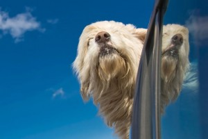 10 Tips to Help Stop Motion Sickness in Dogs