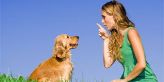 Working with pets - Dog Training