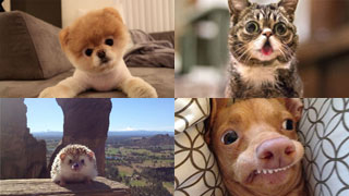 Internet Superstar Pets - Our Top 10