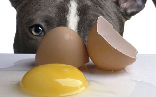 Raw eggs should not be given to dogs due to potential food poisioning and affects vitamin B absorption