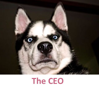 The CEO at DogCo