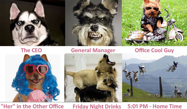Funny dogs working in an office