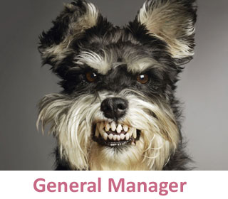 General Manager at DogCo