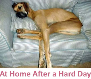 At home after a hard day at DogCo