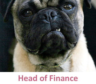 Head of Finance at DogCo