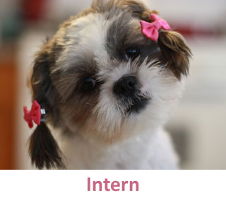 Intern at DogCo
