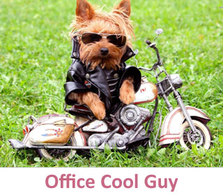 Office Cool Guy at DogCo