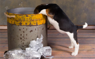 Plastic wrap can be dangerous for dogs