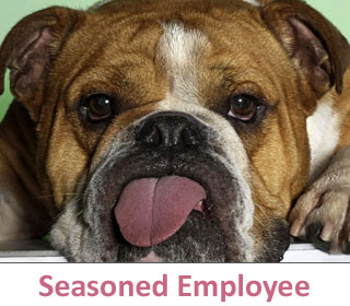 Seasoned employee at DogCo