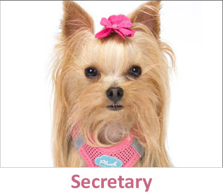 Secretary at DogCo