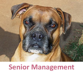 Senior Management at DogCo