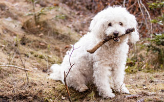 Sticks can be a major cause of choking in dogs