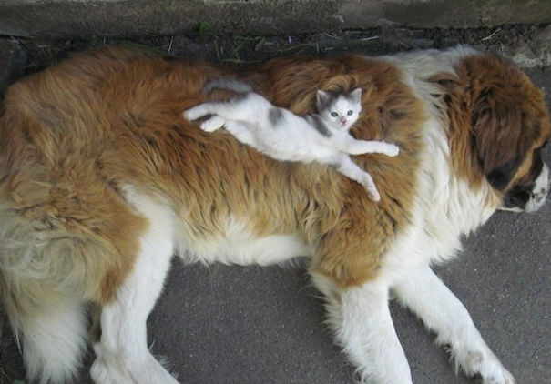 Cats sleeping on dogs