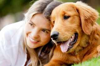Popular dog breeds in Australia