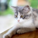 Basic first aid for cats