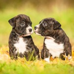 Advice for new dog owners - What you need to know
